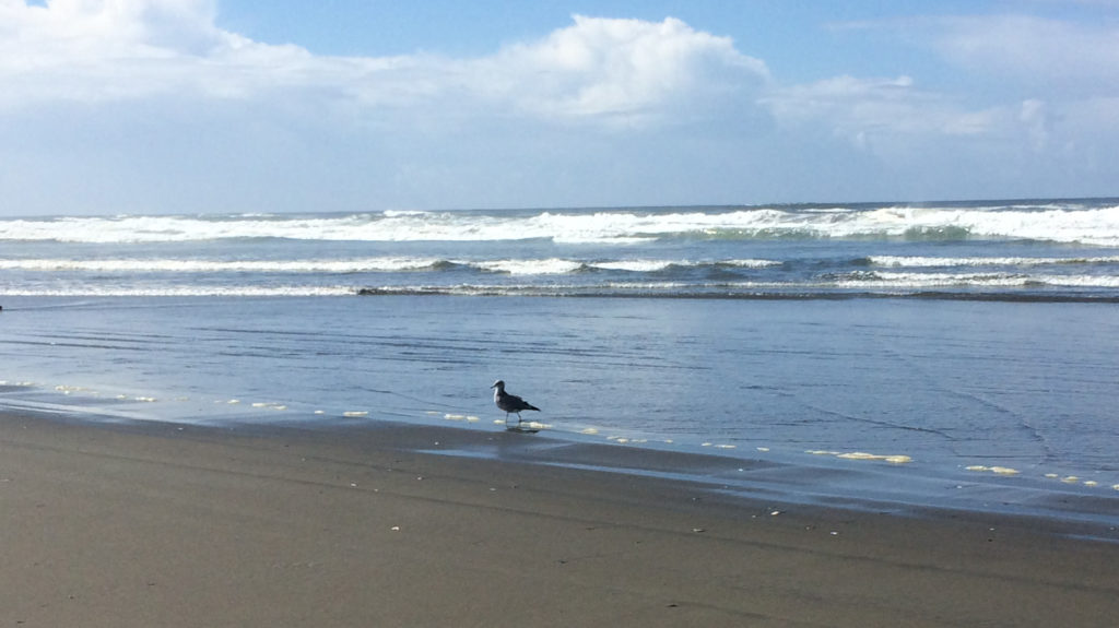 Seagull on Ocean Shores Beach 2019